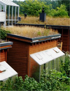 Green roofs reduce storm water run-off. (Photo: Saara Pellikka 2013)